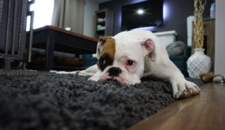 4 Pet Rules for Tenants